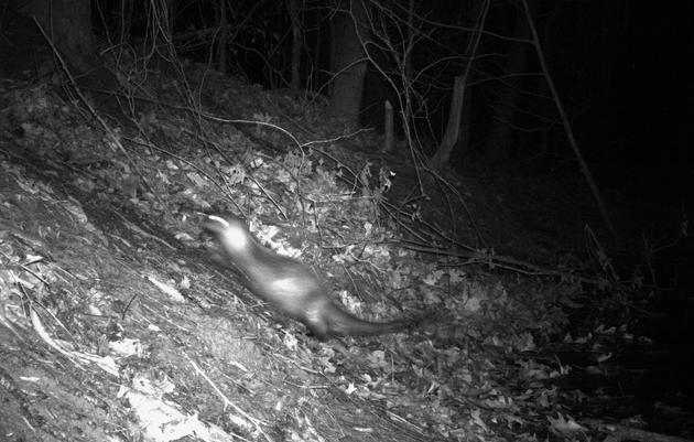 Trail Camera, Wildlife News & More