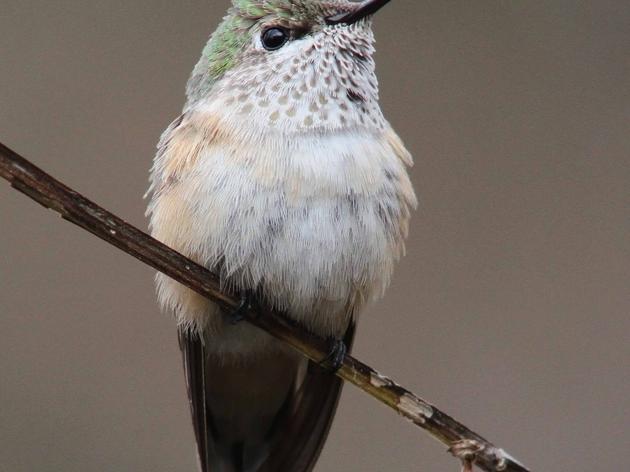 Birders Flock to SPAC for Rare Bird Sighting