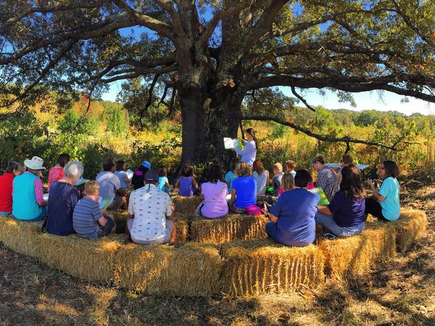 Habitat Day: Marigold and the Faraway Tree