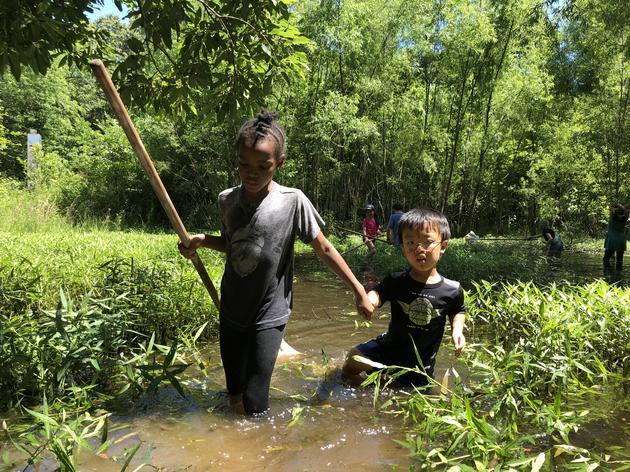 Junior Naturalist & Ecology Camp